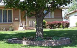 На каком расстоянии от дома можно сажать деревья: нормы СНиП и закон