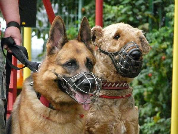 Собаки на поводках
