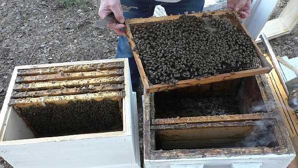 Пчелы на даче